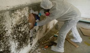 Should You or Should You Not Get a Mold Test Done by a Mold Removing Professional?