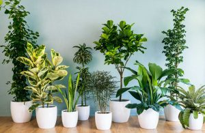 Best indoor plant in Singapore
